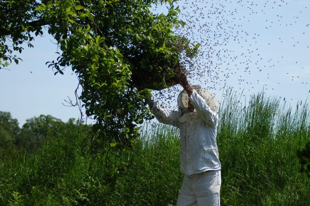 justice pour les apiculteurs